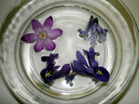 Crocus_and_iris