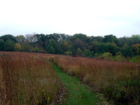 Owen_woods_meadow_fall_2005